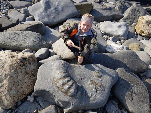 Large Ammonites resting on Monmouth beach