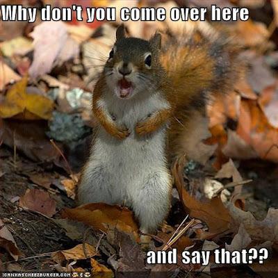 squirrel-shit-just-got-real.jpg