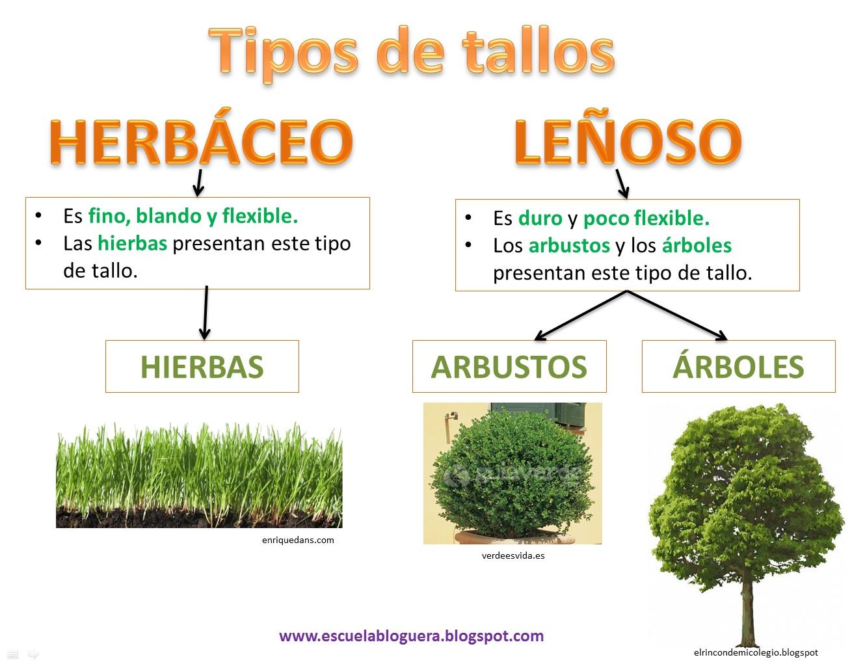 Escuela bloguera las plantas for Tipos de arboles y sus caracteristicas