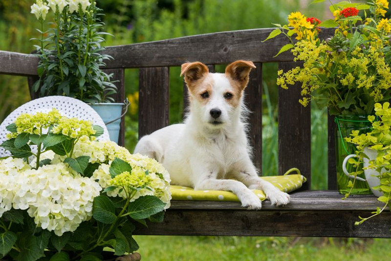 Keep Your Garden Pet Friendly With This Simple, Savvy Advice
