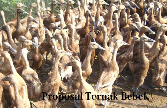 Proposal Ternak bebek