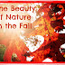 The Beauty of Nature in the Fall