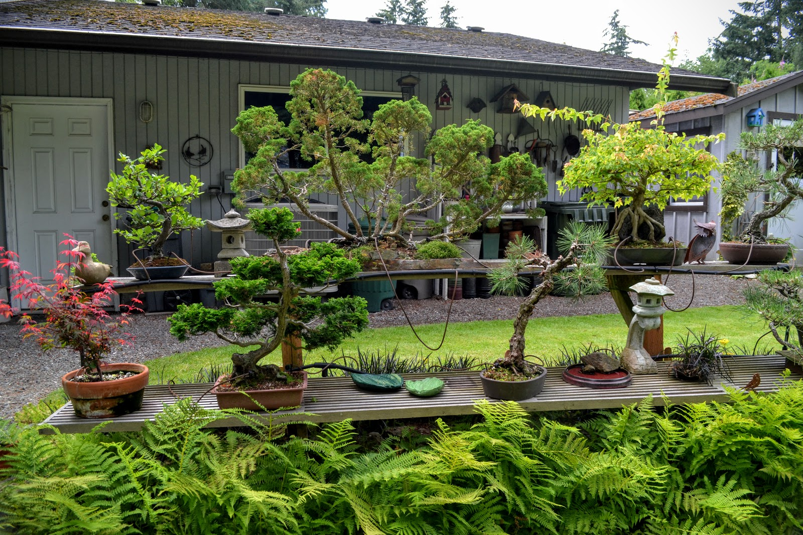The Outlaw Gardener Revisiting Linda And Tom Reeder39s Seatac Garden