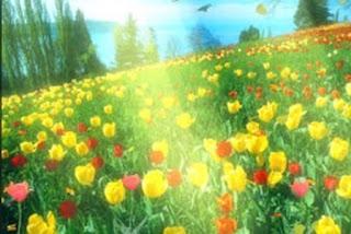 Arti Mimpi Berada Di Kebun Bunga Naggrek