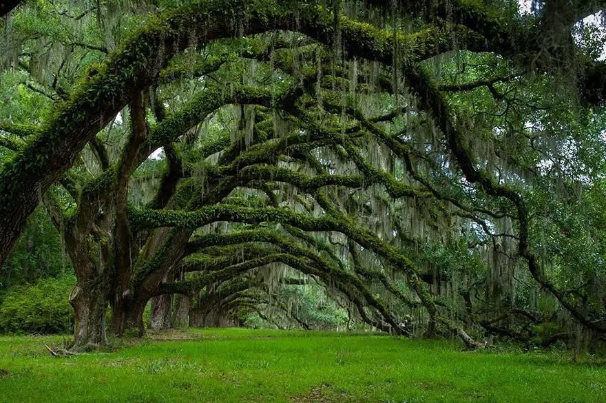 Картинки по запросу beautiful trees