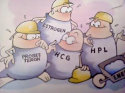 Gambar 4 Jenis Hormon Kehamilan Penyebab Rasa Tidak Nyaman
