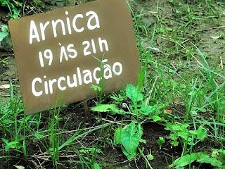 Das 19h às 21h - Arnica. Relógio Medicinal do Horto Medicinal, Candelária (RS)