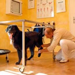 exercícios para cães com hernia de disco