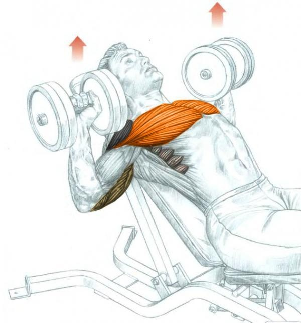 The Best Dumbbell Chest Exercises - all-bodybuilding.com