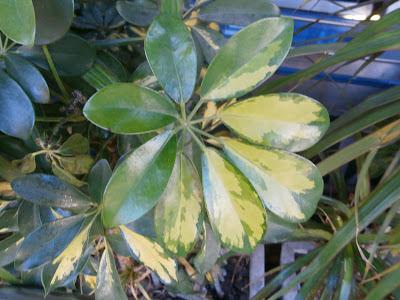 Herbario virtual de banyeres de mariola y alicante 23 ene for Fotos jardines particulares