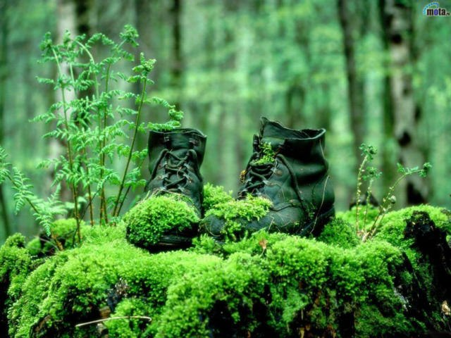Bots in Forest