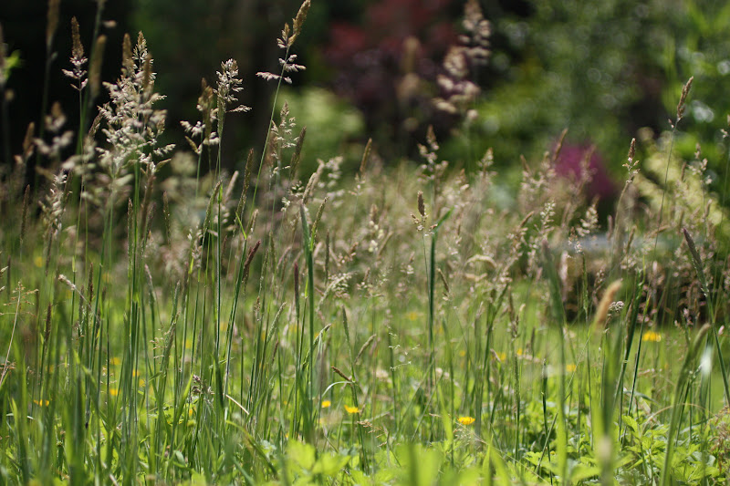 Temperate Grassland Animals List