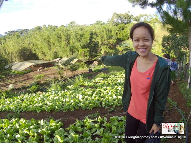Organic Herbs at Alomah's Place Organic Farm in Bukidnon