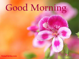 Free Download 60 Beautiful Hd Good Morning Images With Flowers