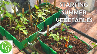 Starting summer vegetable seeds