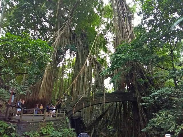 достопримечательности Убуда Monkey Forest ( Лес Обезьян).
