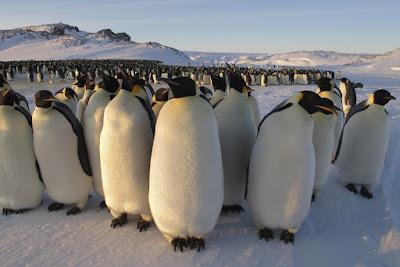 Série inédita sobre pinguins dá início à nova fase de produções da BBC. Vai ao ar neste domingo (2/4), às 18h - Divulgação