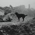 4. Kárhozat (1988): Kûçikê li Ber Baranê