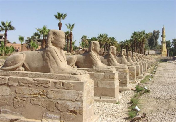 The Sphinxes in Luxor are reborn