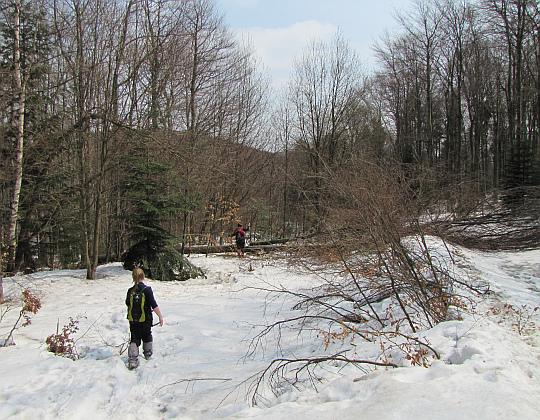 Omijanie drzewa powalonego na leśnej drodze.