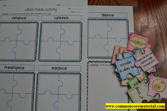 Mitosis Puzzle Activity | Math in Demand