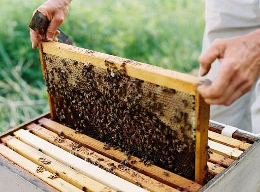 Δέκα βήματα για να γίνεις μελισσοκόμος | BEENEWS