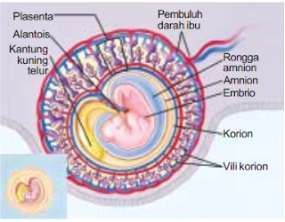 Bagian-Bagian Selaput Pembungkus Embrio