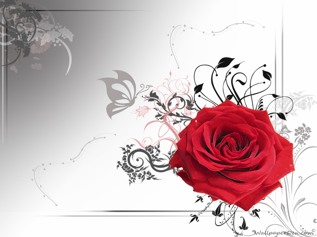 Fantastisch Rose Hintergrundbilder | Liebe Hintergrundbild ...