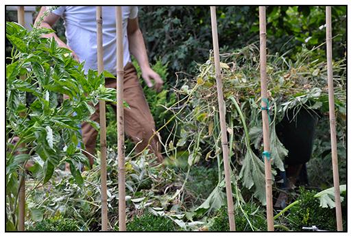 Asian Types Plants Squash