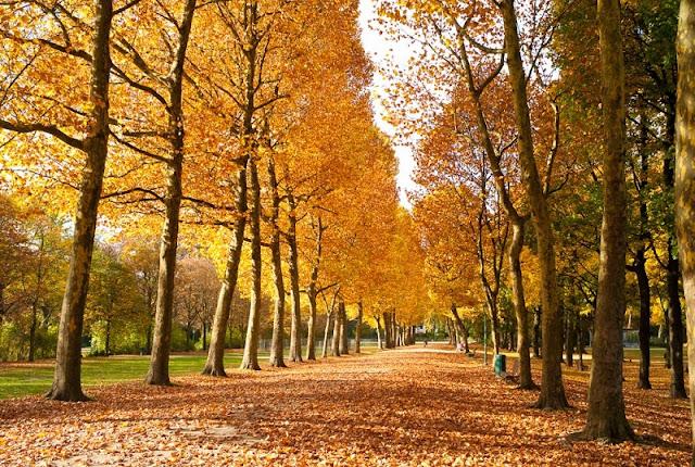 Outono em Bruxelas