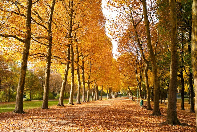 Outono na Bélgica