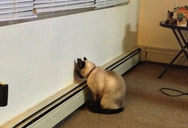 Resultado de imagen para perros recargados en la pared