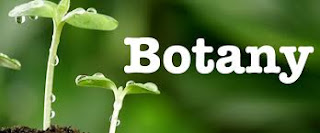 Bs Botany
