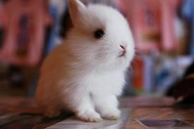 fluffy baby bunny - photo #23
