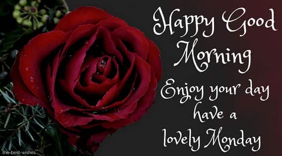 111 good morning wishes for a happy monday best images blessed monday greetings with red rose m4hsunfo