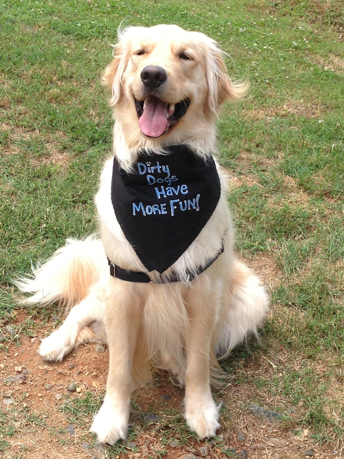 the Woodward Place: DIY Dog Bandana