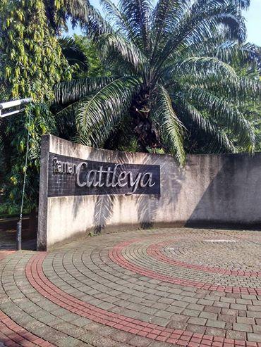 RTH Cattleya