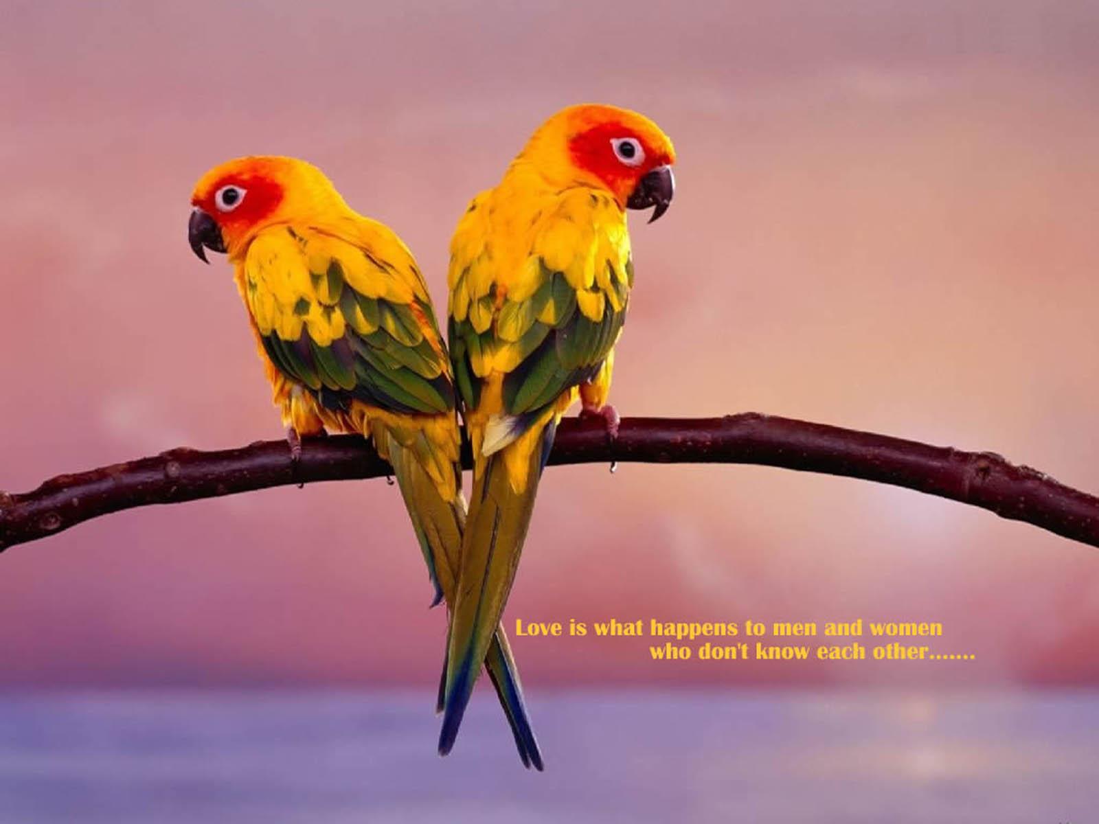 mp3 download free forever birds falcon wallpaper 1920x1080 birds