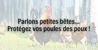 Parlons petites bêtes… Protégez vos poules des poux !