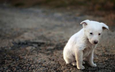 Δημιουργείται διαδημοτικό καταφύγιο αδέσποτων ζώων