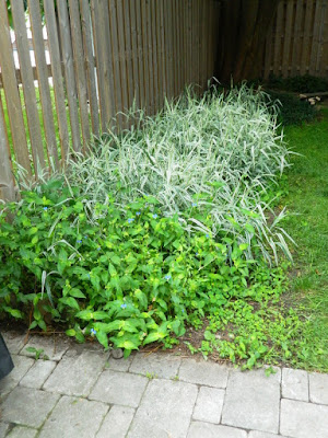 Upper Beaches Toronto backyard cleanup before by Paul Jung Gardening Services