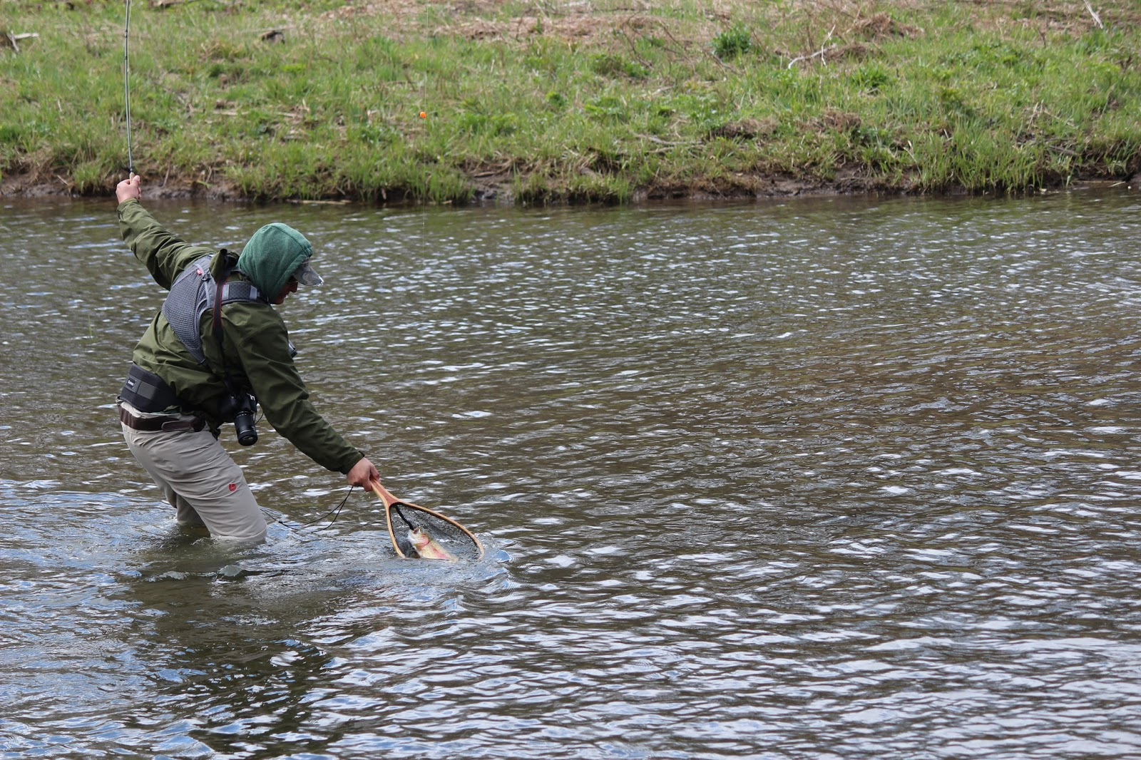 Wny fly fishing wny fly fishing stream report 4 23 2016 for Fly fishing blog