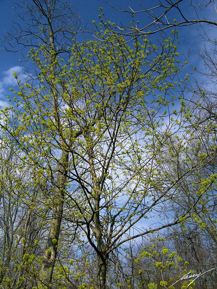 spring green three trees - photo #25