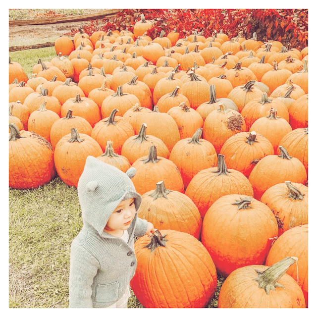 little boy standing beside big pumpkins