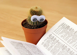 """A small cactus with googly eyes, """"reading"""" a dictionary."""