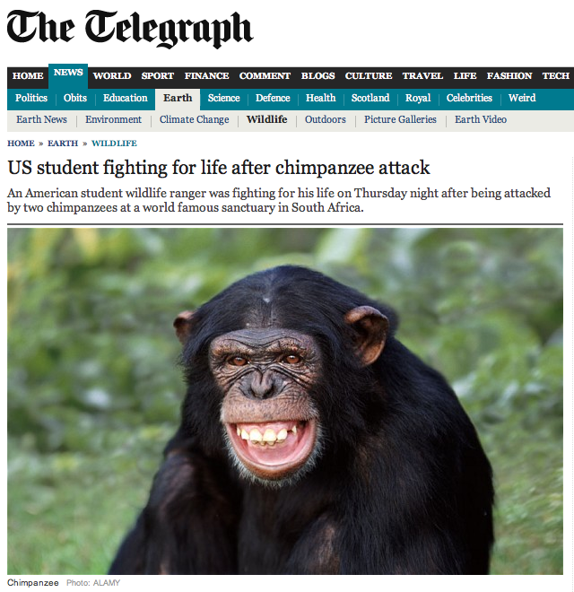 The Subversive Archaeologist: Update on 'Chimps Attack and