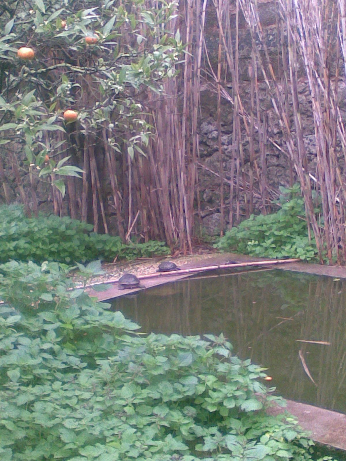 A r f associazione recupero fauna navetta testuggini for Laghetto tartarughe esterno