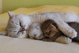 7 Tips agar tidur Anda nyenyak dan lebih lelap