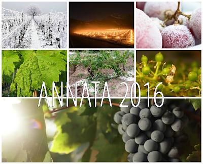 annata vino 2016 previsioni