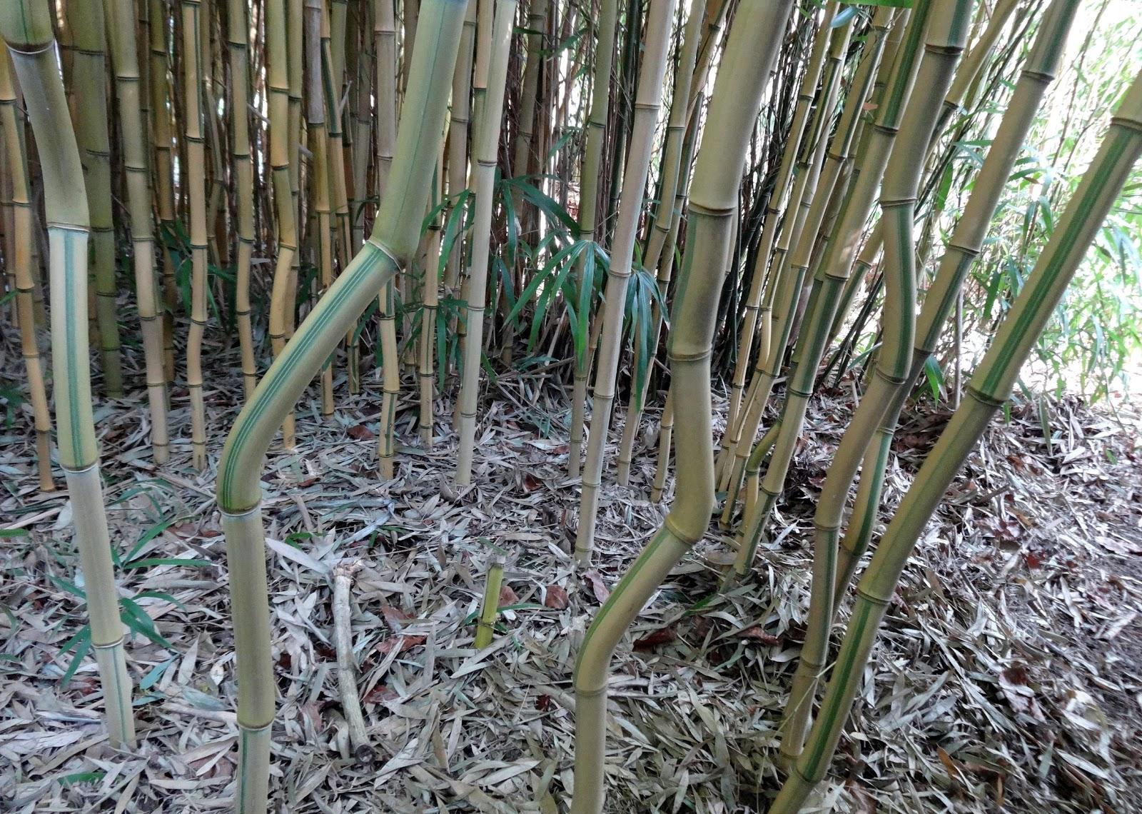 Le blog de parcs et jardins de l 39 oise le jardin du clos - Jardin de bambou cannes ...